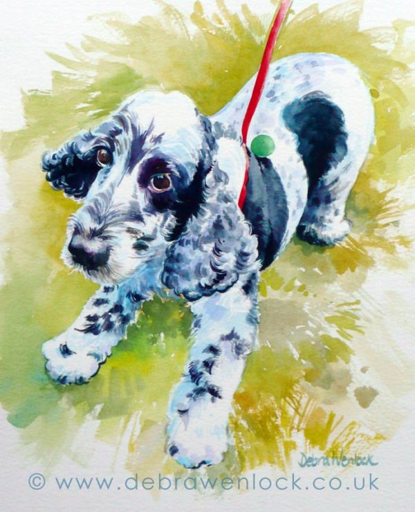 Spaniel Puppy watercolour by Debra Wenlock
